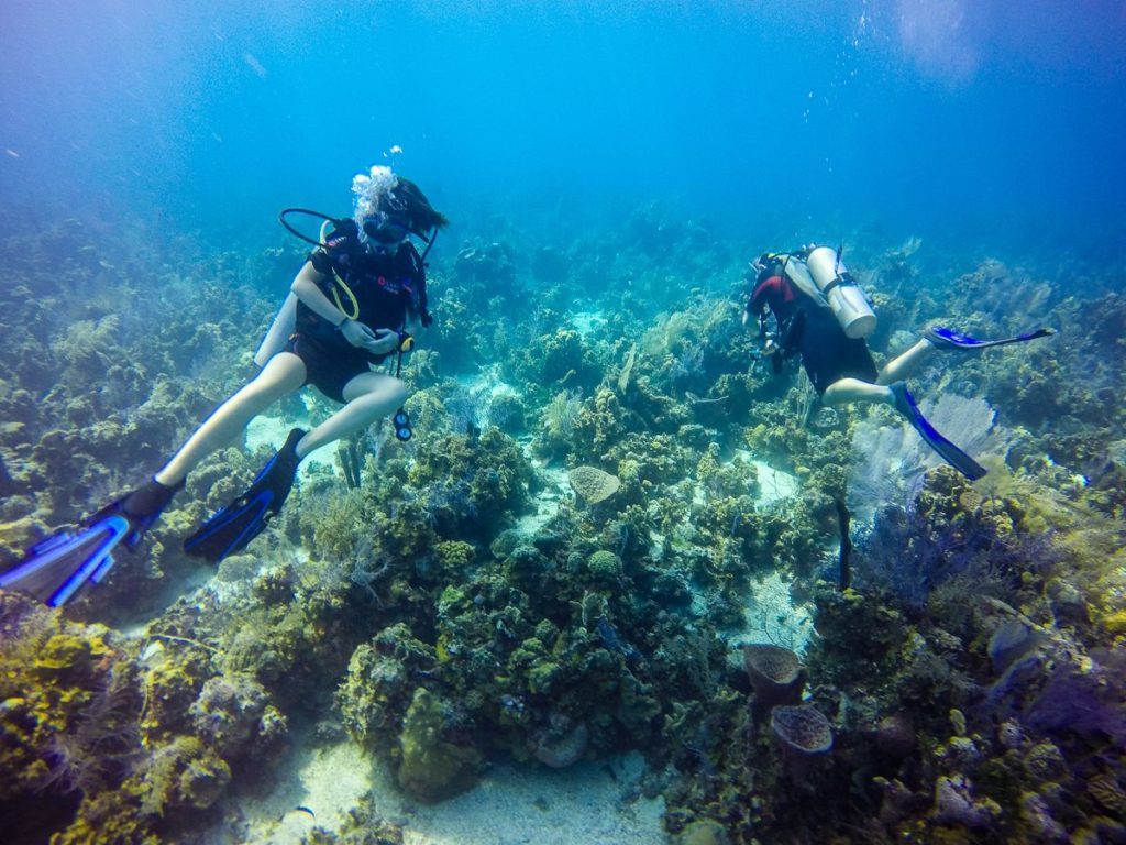 Diving with Marina Blue